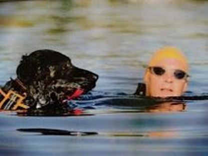 Picture of Box End Swimming with Dogs
