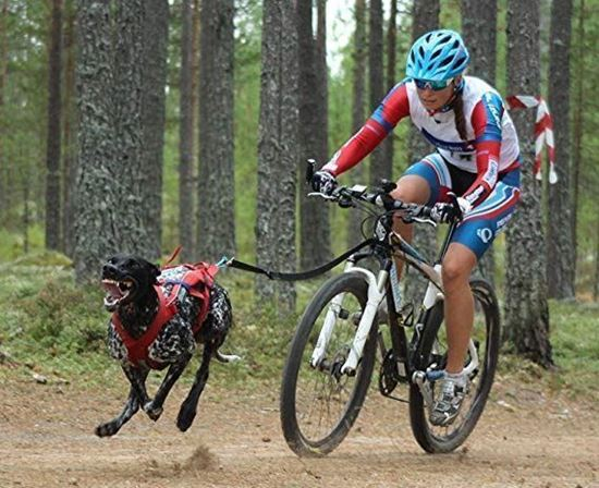 Picture of Bikejor 9th & 10th October 2021